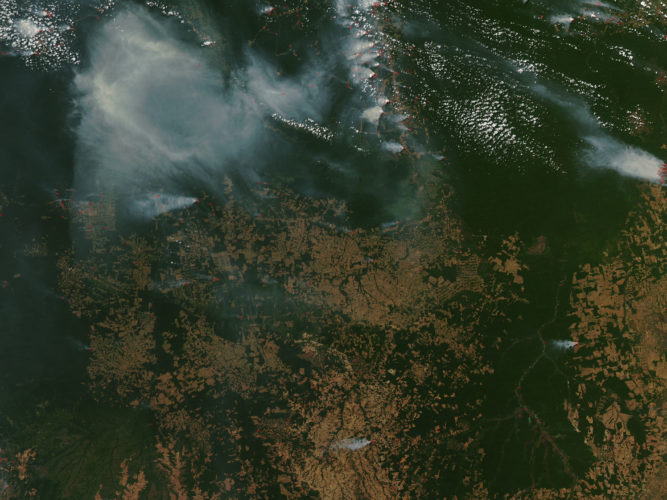 The Amazon Rain Forest - A 30+ Year Catastrophe in the Making